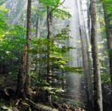 The forest<br />photo credit: Wikipedia