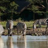 Sweetwaters Serena Camp, Ol Pejeta Conservancy, Kenya<br />photo credit: serenahotels.com