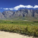 Stellenbosch Wineries, South Africa<br />photo credit: beachcomberpete.com