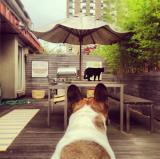 My Terrace, East Village, New York City<br />photo credit: Kathy Delaney